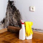 Stor besparelse på professionel håndtering af skimmelsvamp